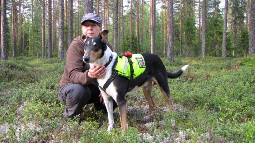 Alertness Versatility 'Tempo' -approved rescue dog in Finland. Photo copyright Jaana Aarnikare